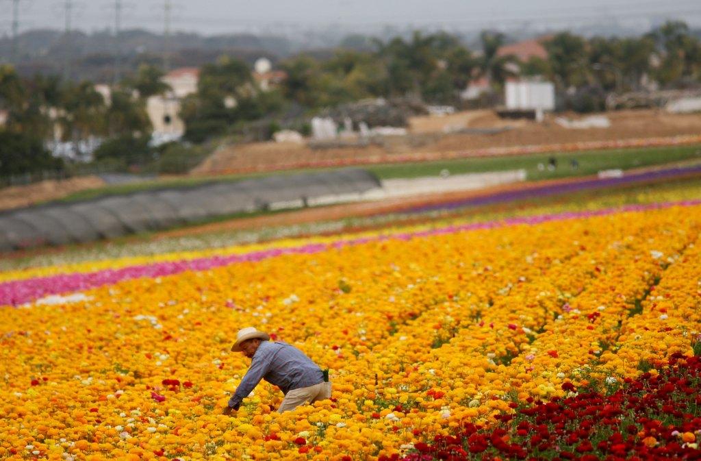 Nueva ley otorgaría una ruta a la ciudadanía a trabajadores agrícolas